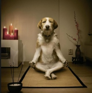DogMeditating